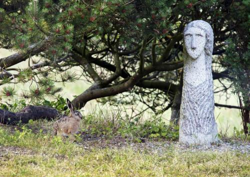 Hare hilser på Agnes, kristen martyr